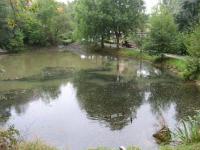 Rybníček v Sedleci